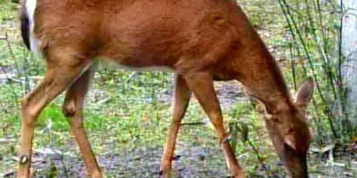 Chronic Wasting Disease confirmed in second Mississippi white-tailed deer