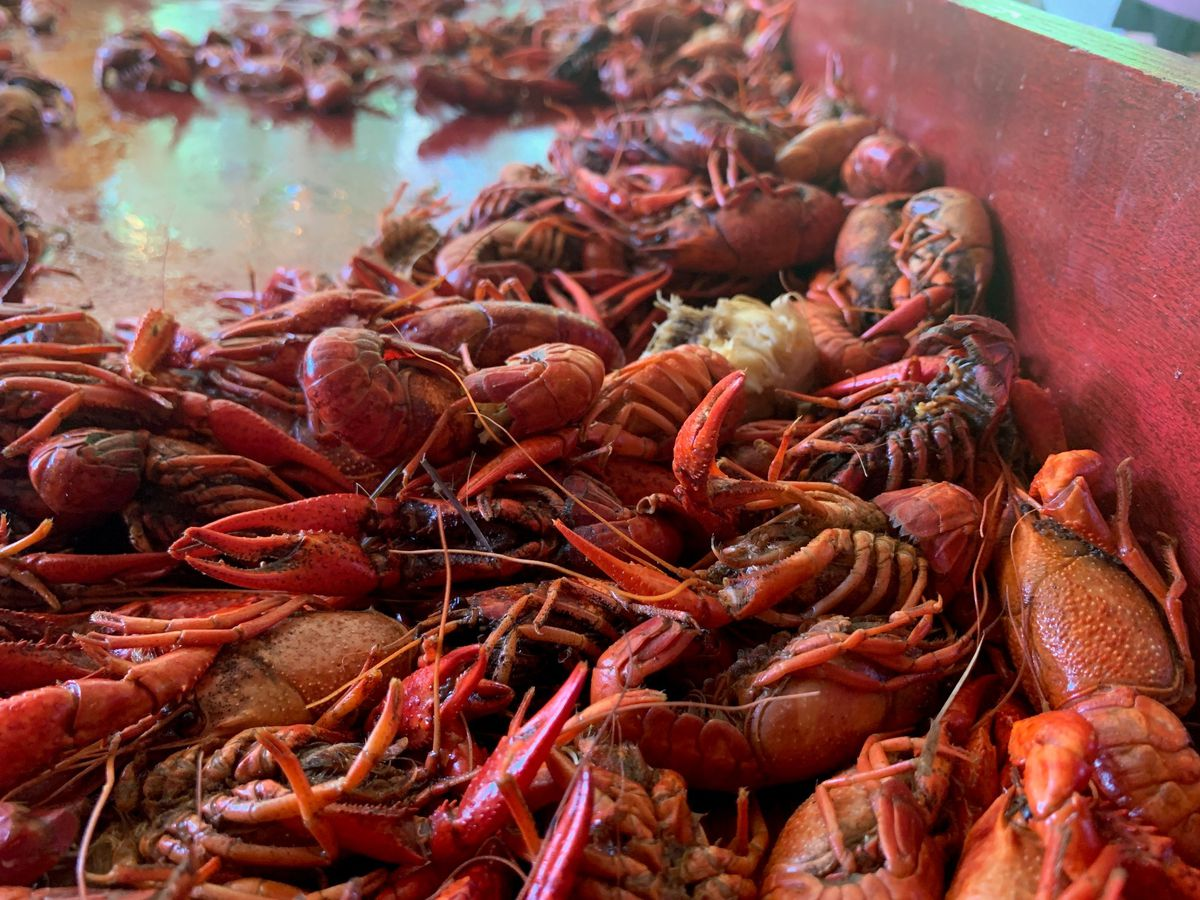 Crawfish boil held in Petal to celebrate new mayor