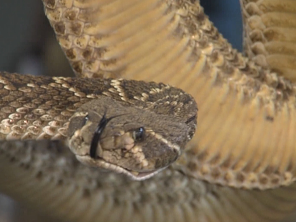 Wildlife biologist shares tips, facts about snake encounters