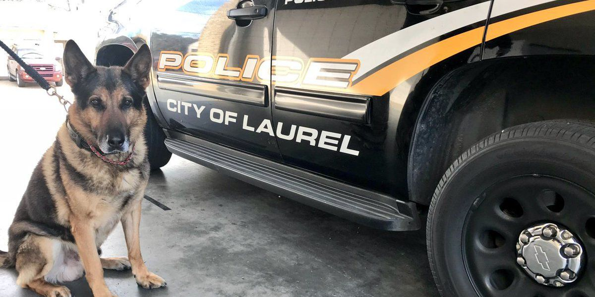 Man charged with attack on Laurel K-9