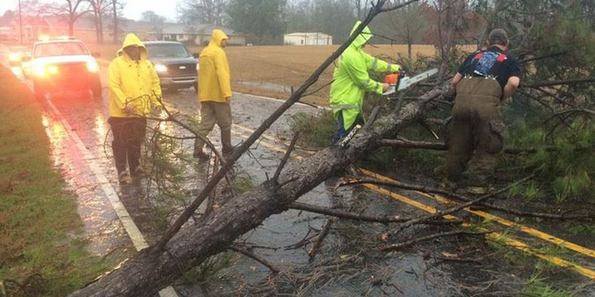 Trees in Pine Belt split by Saturday tornado