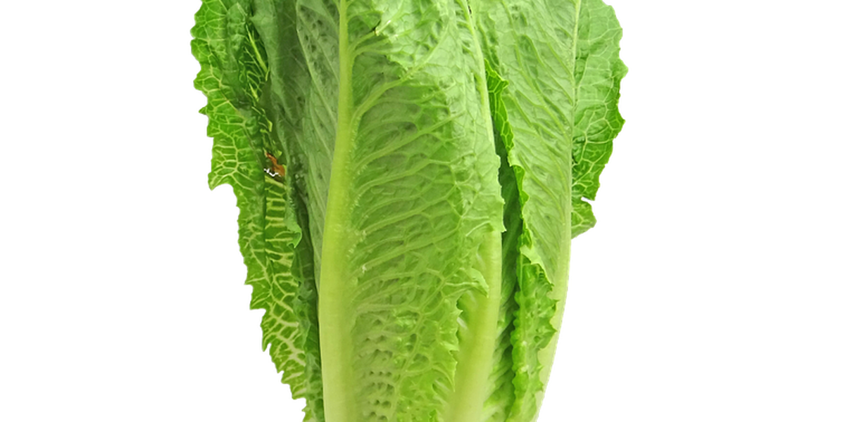Romaine lettuce E-coli outbreak spreads to MS