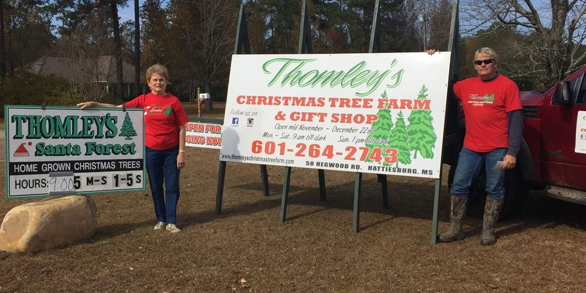 Thomley's Christmas Tree Farm tradition for Pine Belt families