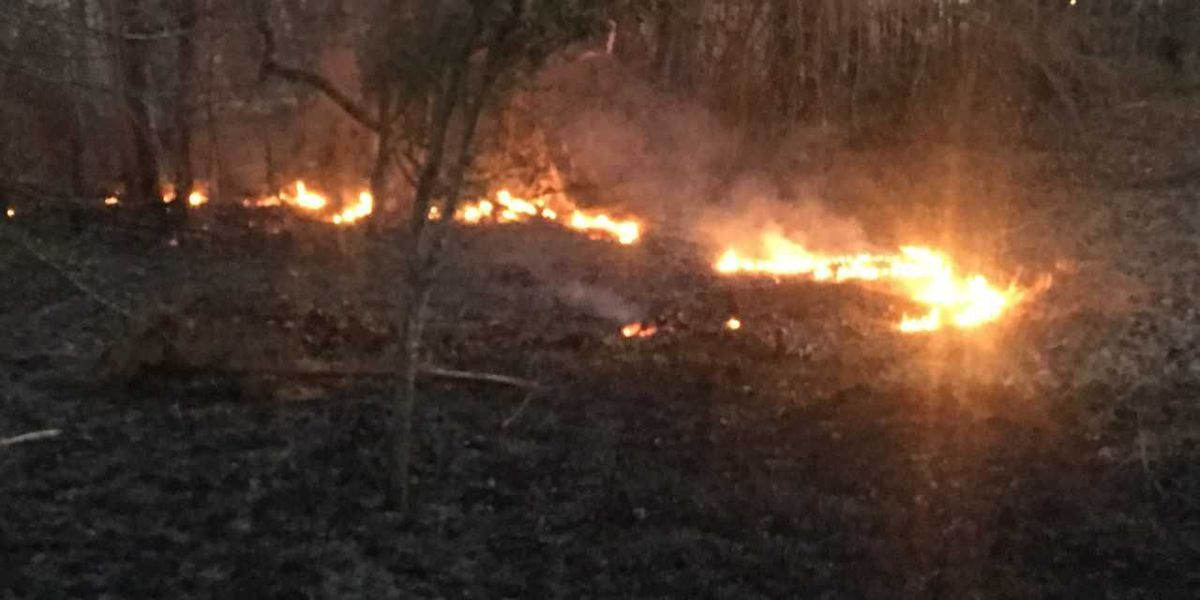 Wildfire burns 7 acres of forest in Lamar County