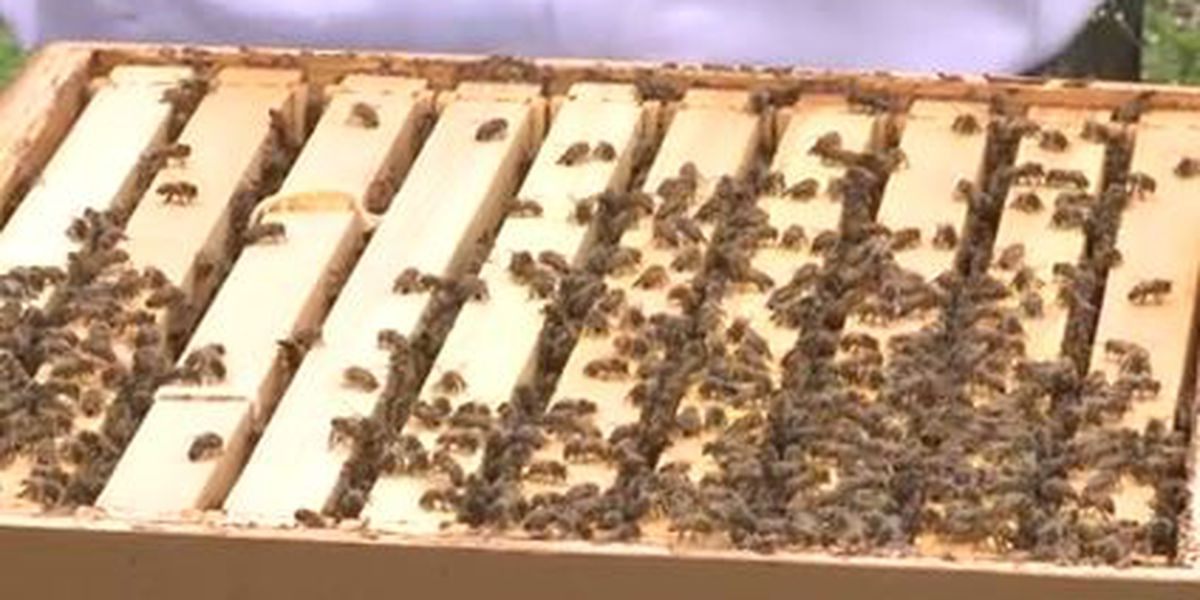 Queen Bee: Saving Hives and Building Leaders