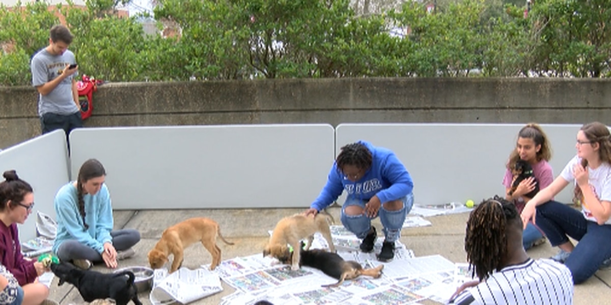 Jones College students relieve finals stress with rescue puppies