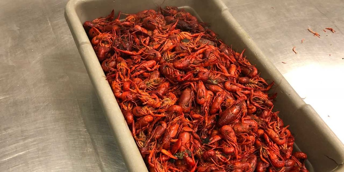 Short supply means high prices for mudbugs, at least for now