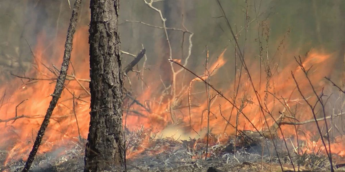 Officials remind public of statewide burn ban as Fall temperatures descend upon South
