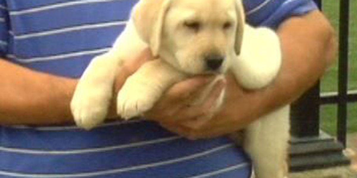 Service Dog Program seeks local help