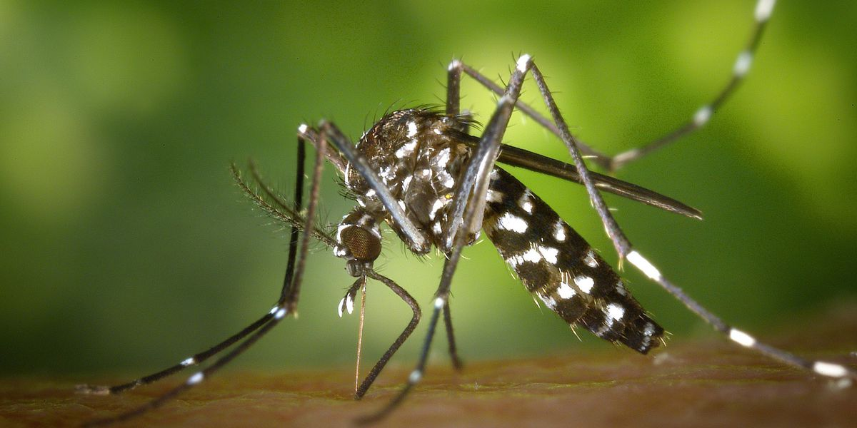 New West Nile Virus case reported in Forrest County