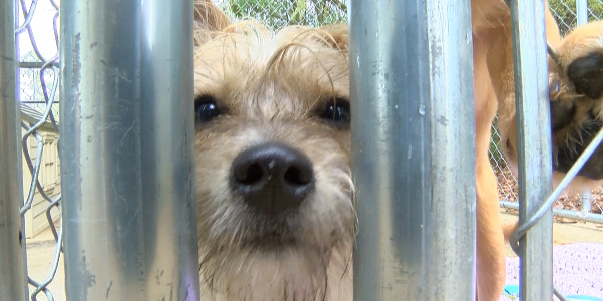 Shelter for abused women now offers safe haven for clients' pets, too