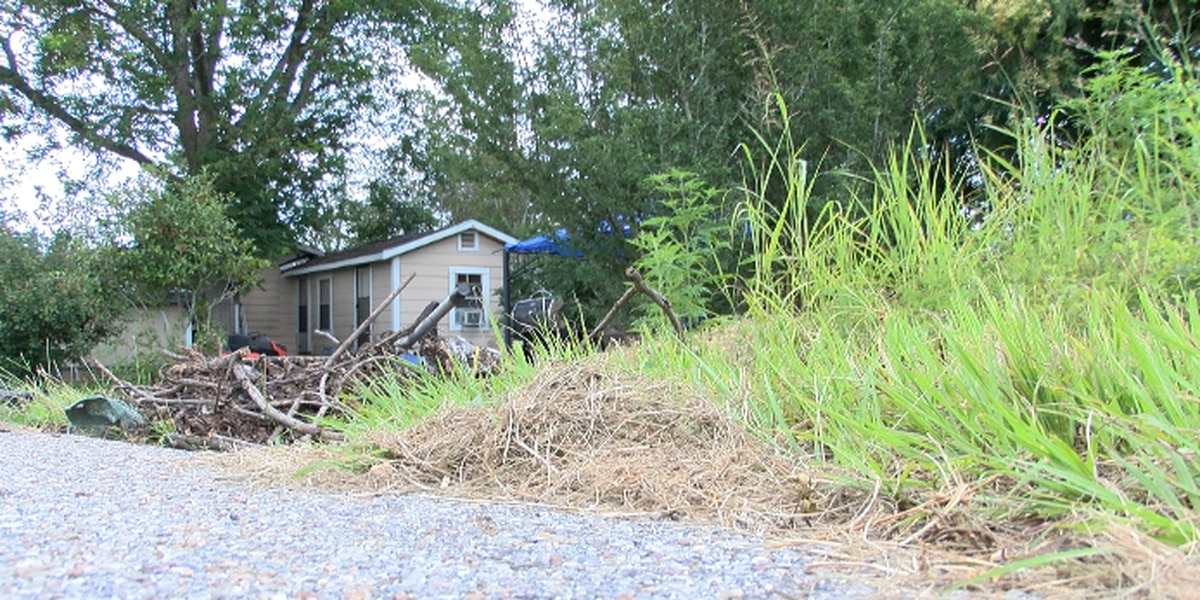 Laurel residents fed up with overgrown private lot
