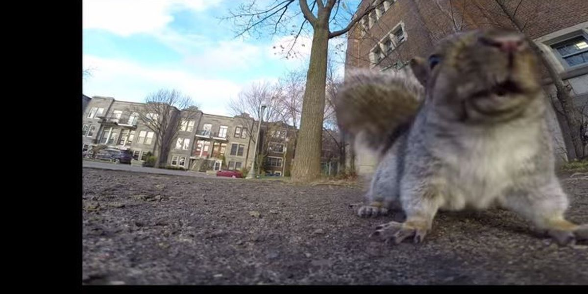 VIDEO: Squirrel meets a GoPro
