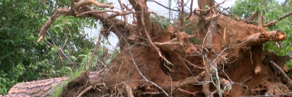 Lamar County urging tornado victims to push debris to roadside for pickup