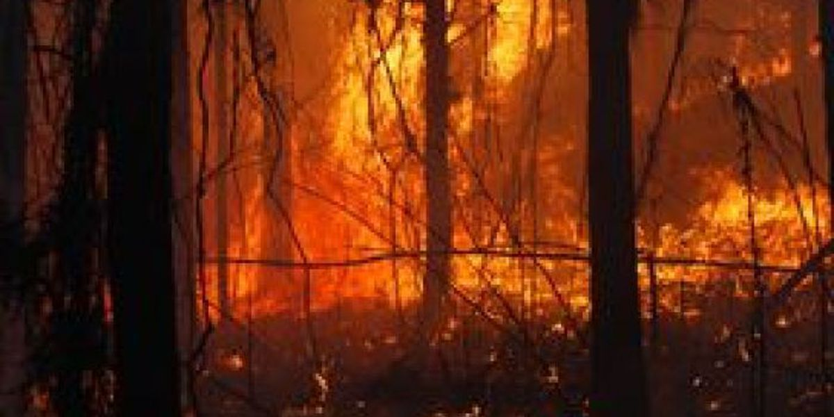 Mississippi man dies in wildfire accident