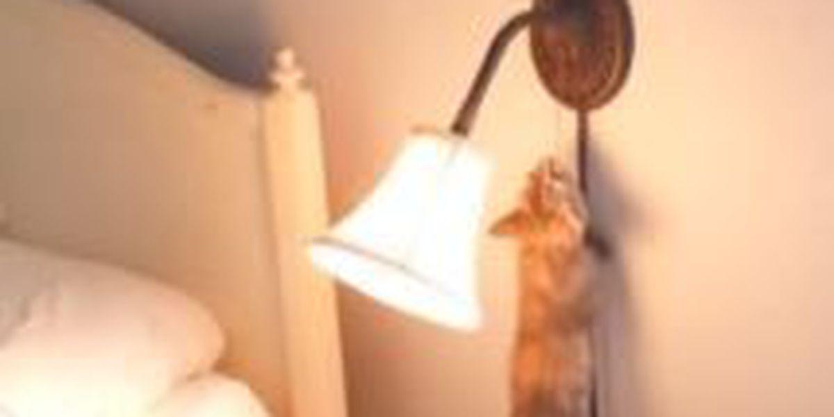 VIDEO: Kitten vs. lamp switch