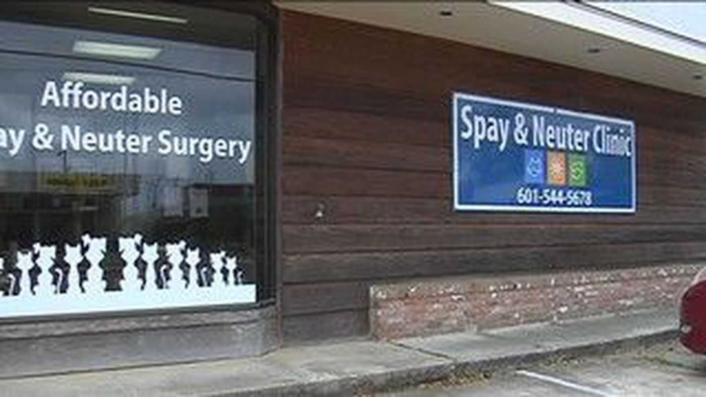 Southern Pines Offering Free Spay Or Neuter For Feral Cats In April