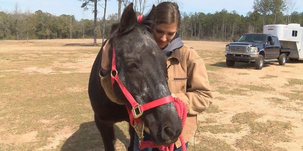 Valentine's day: Woman reunites with horse after 7 years