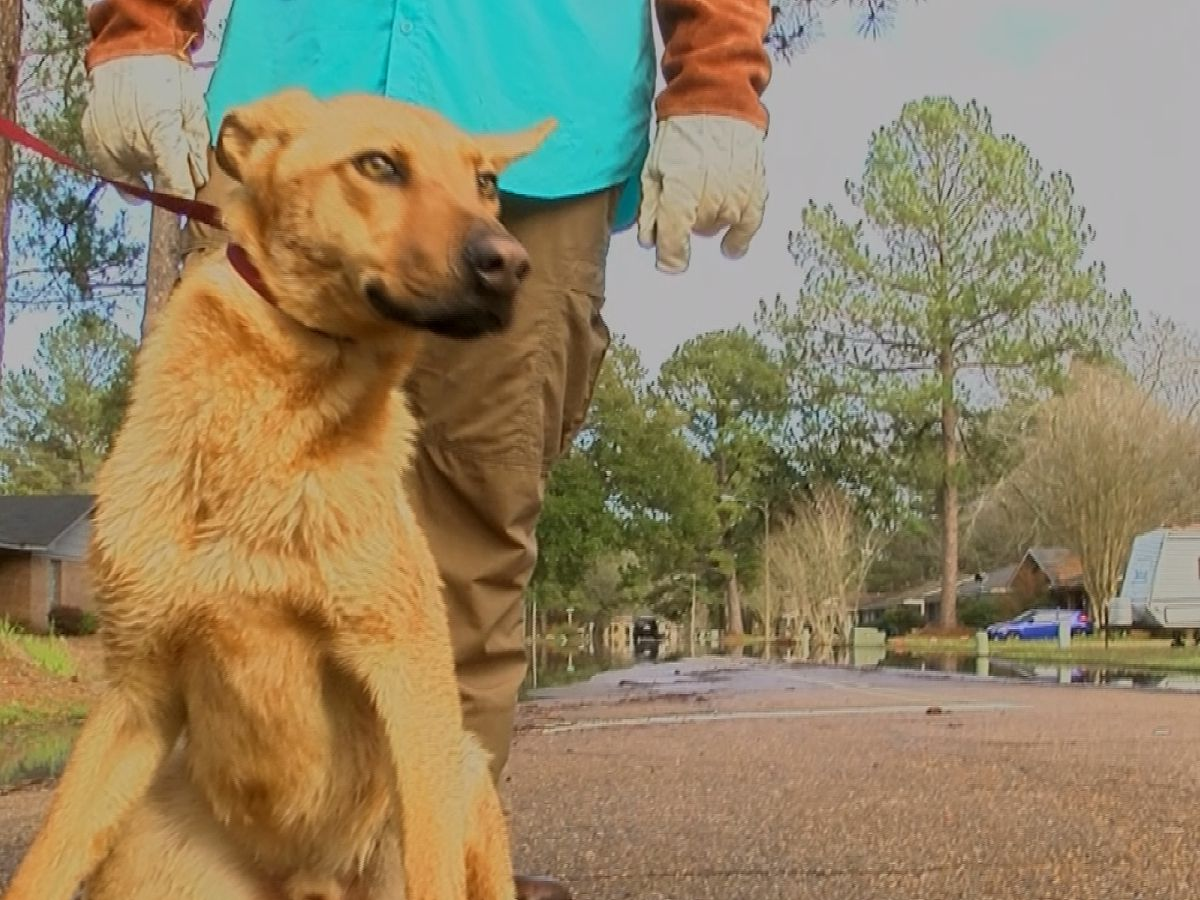 Local animal rescue saves animals stranded by floodwaters