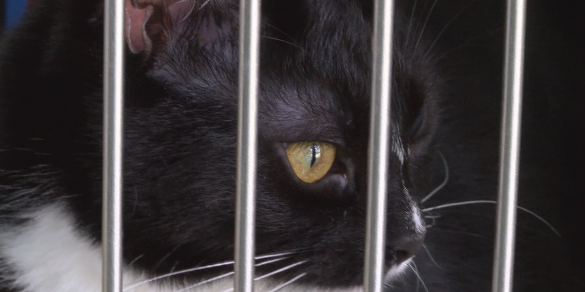 Southern Pines hopes foster care for homeless pets will increase during coronavirus pandemic