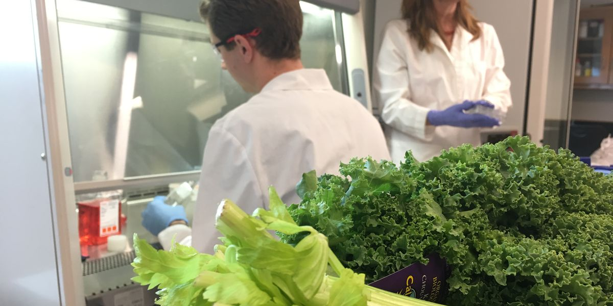 Kale juice may kill cancer cells, Belhaven University researchers say