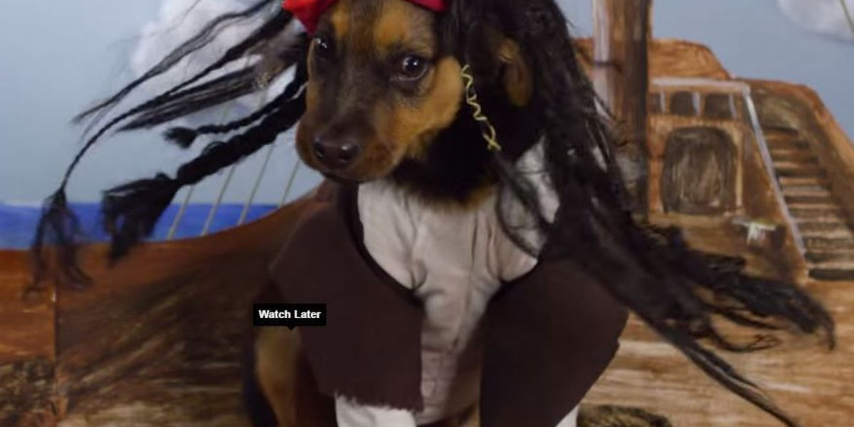 VIDEO: Dogs dress up as Disney characters