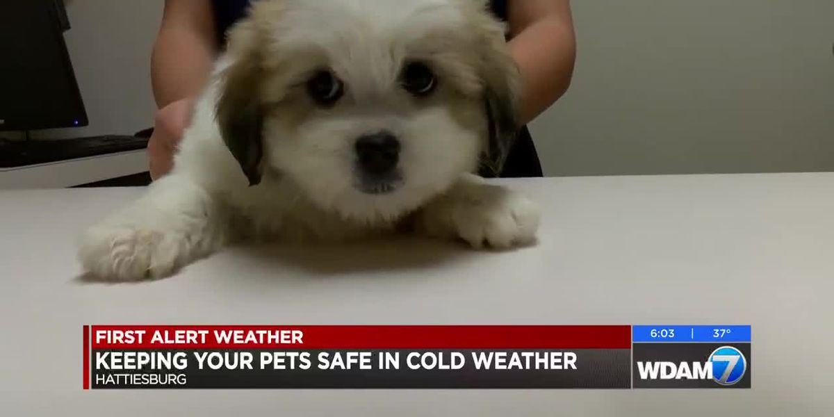 Tips to keep pets warm in the cold weather