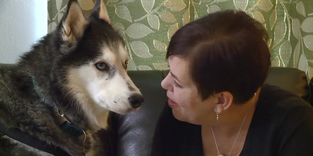 Dog credited with detecting owner's cancer three times