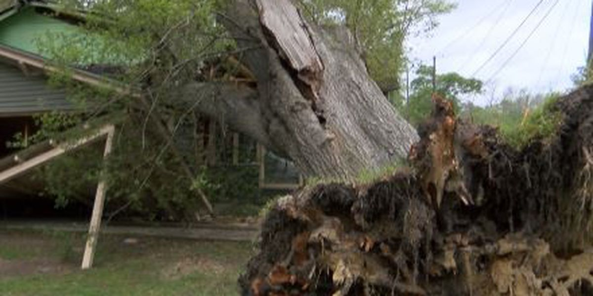 Flooding raises concerns for falling trees