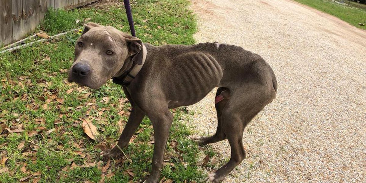 Five neglected dogs, cat rescued in Wayne County
