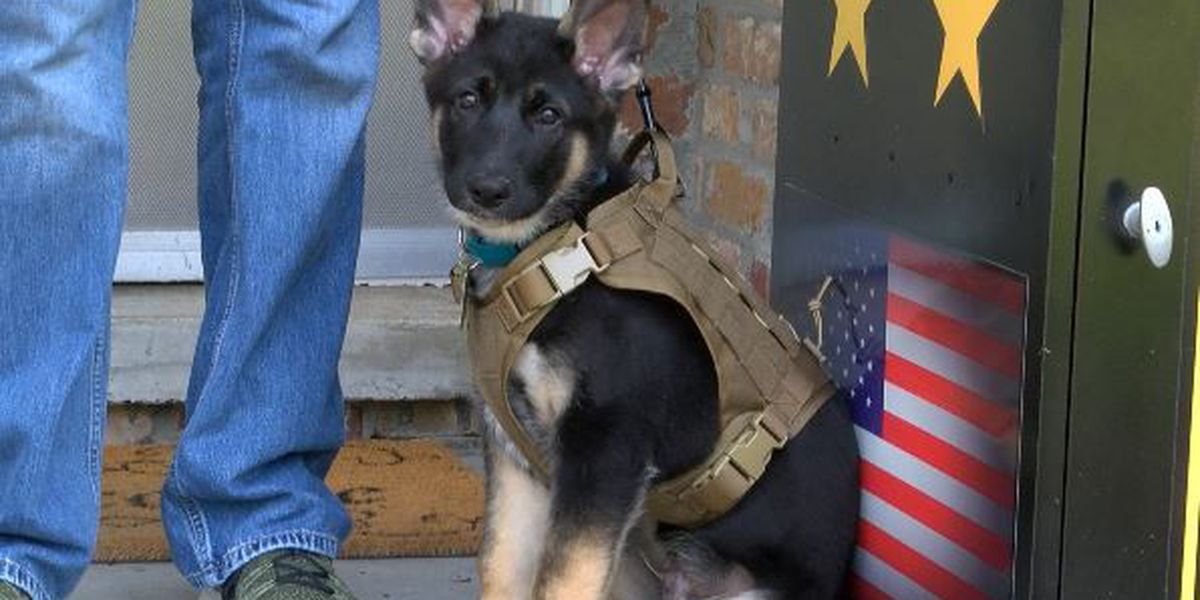 'Operation Paws for Patriots' to pair pups with USM student-veterans
