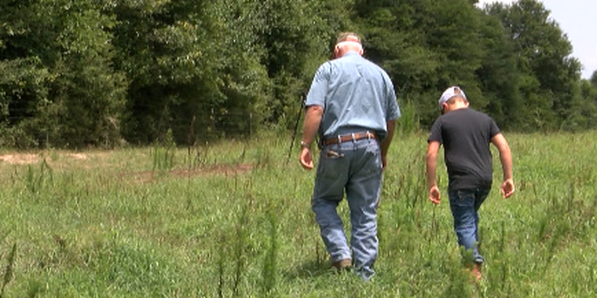 Cattle killed on ranchers property in Beaumont