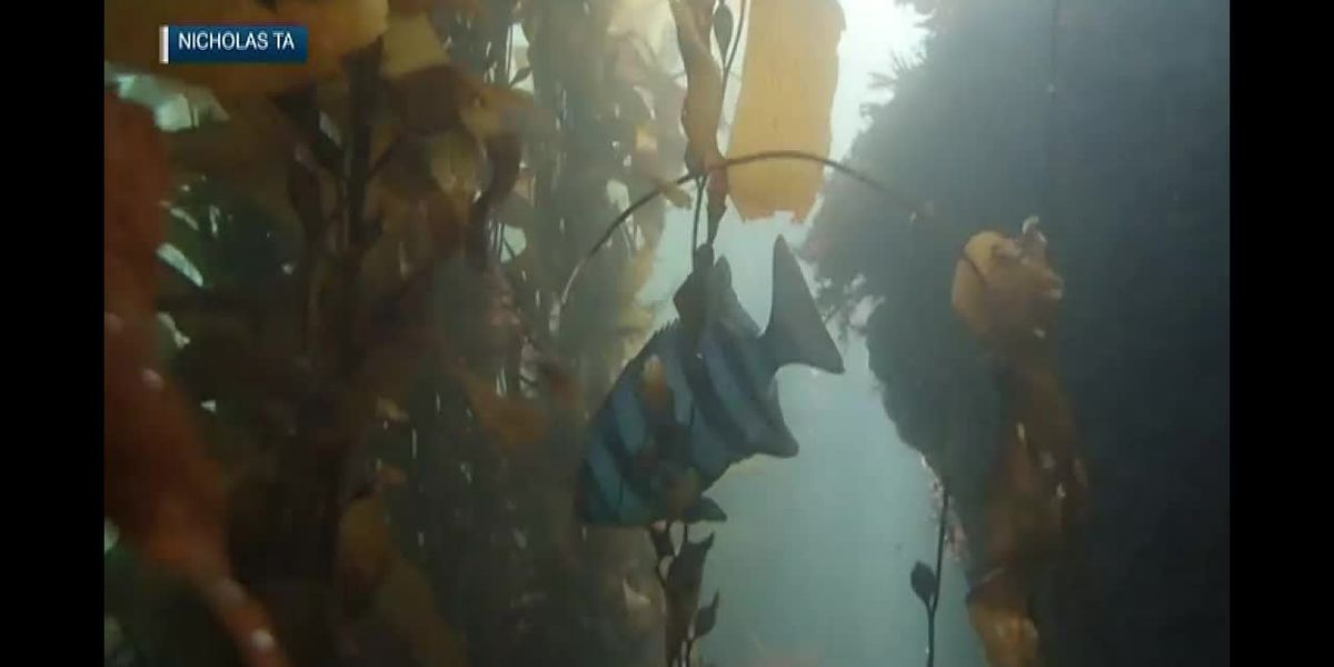 Rare 'tsunami fish' spotted off California coast