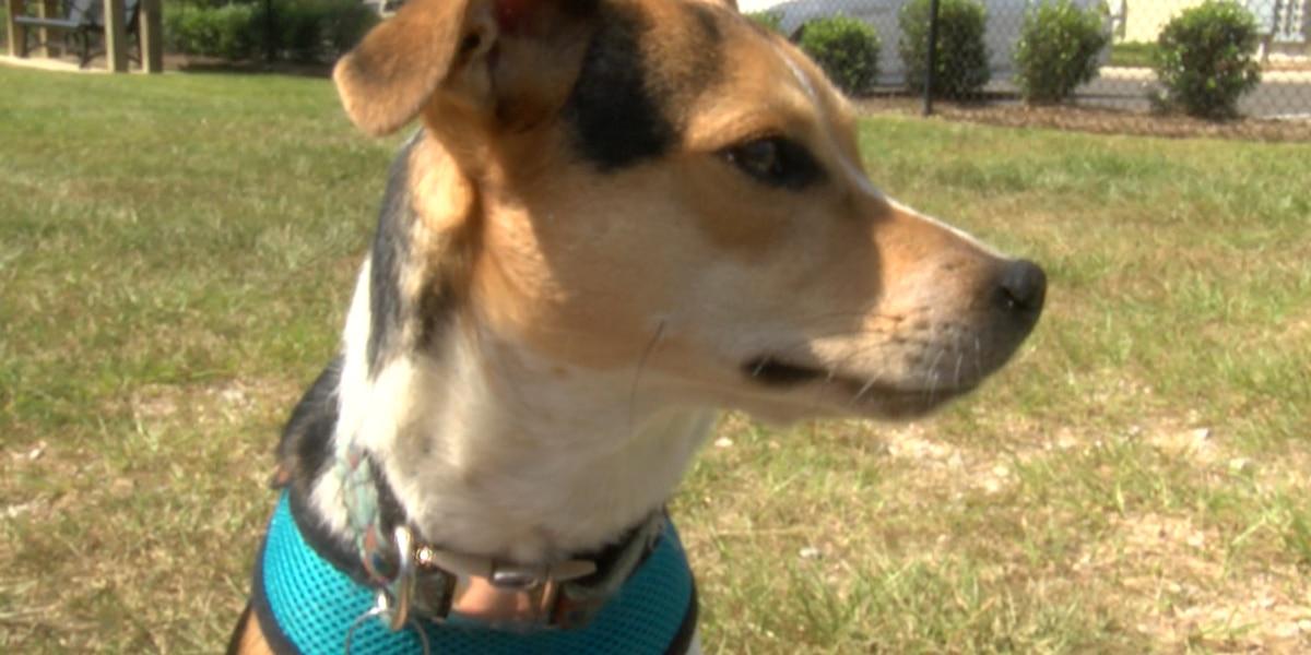Study shows pets benefit senior citizens health