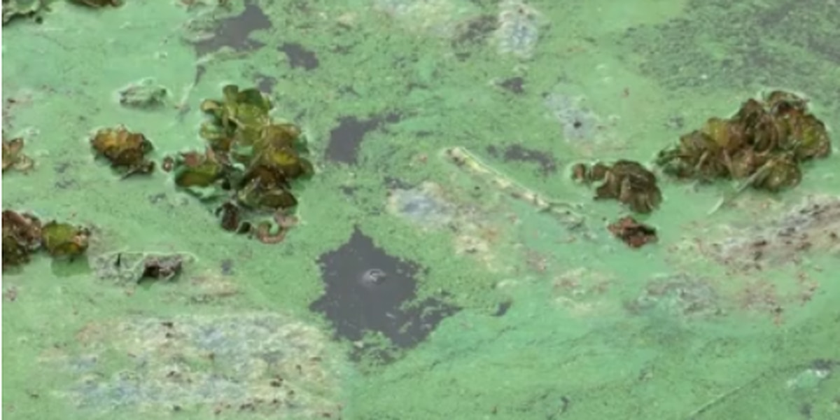MDEQ tests show blue-green algae present along some beaches after Barry; more testing this week