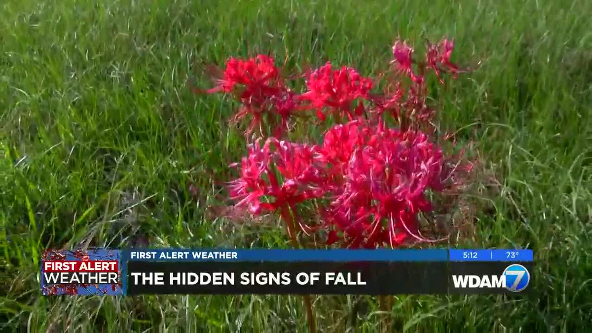 How to spot the subtle signs of fall